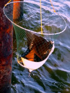 The Stingray Is Too Heavy For This Fishing Net