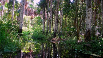 Swamp In Amazon Rainforest:Image Credit: Ivan Mlinaric