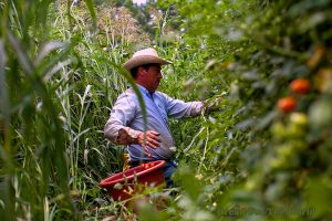 Mexican Migrant Agricultural Worker Here on H2-A Visa. Image Credit: Bread For the World