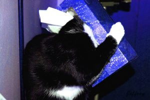 Cat In Tissue Box. Image Credit- Jeffrey. License By CC 2.0