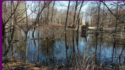 Graniteville Swamp in April