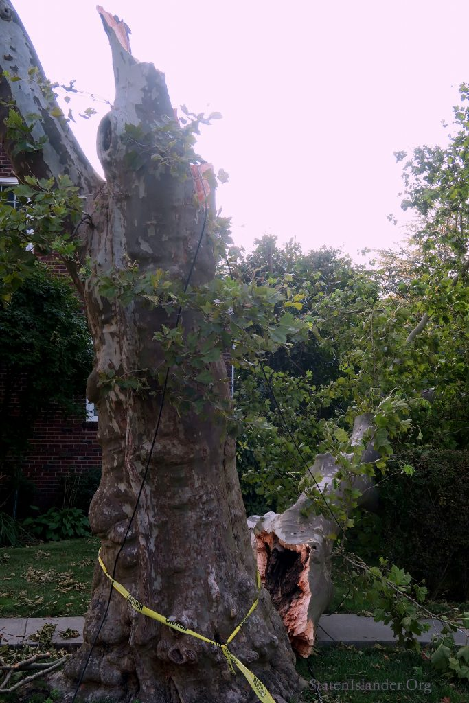 A Tree In New Dorp Was Split By The High Winds Of Tropical Storm Isaias As It Passed Through Staten Island
