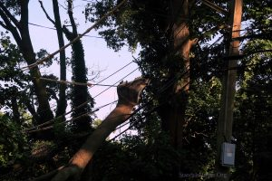 A Tree Sits Atop Power Wires In New Dorp, Staten Island