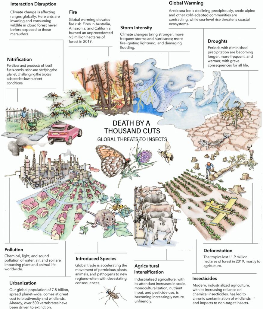 """Death by a thousand cuts: Global threats to insect diversity. Stressors from 10 o'clock to 3 o'clock anchor to climate change. Featured insects: Regal fritillary (Speyeria idalia) (Center), rusty patched bumble bee (Bombus affinis) (Center Right), and Puritan tiger beetle (Cicindela puritana) (Bottom). Each is an imperiled insect that represents a larger lineage that includes many International Union for Conservation of Nature """"red list"""" species (i.e., globally extinct, endangered, and threatened species). Illustration: Virginia R. Wagner (artist). Image Credit - The National Academy Of Sciences"""