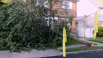 A Tree Topples From The Wind Taking Down Several Power Wires As It Fell In New Dorp On Staten Island's East Shore
